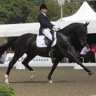 Dolcino Hickstead 2010_square