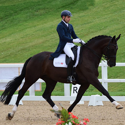Horses For Sale | Assouline Dressage | Dressage Training